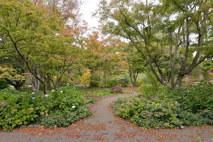 Botanic Gardens Maple Border 0073