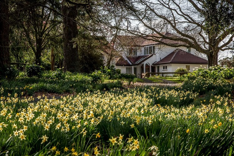 Daffodils Resize And House 2016
